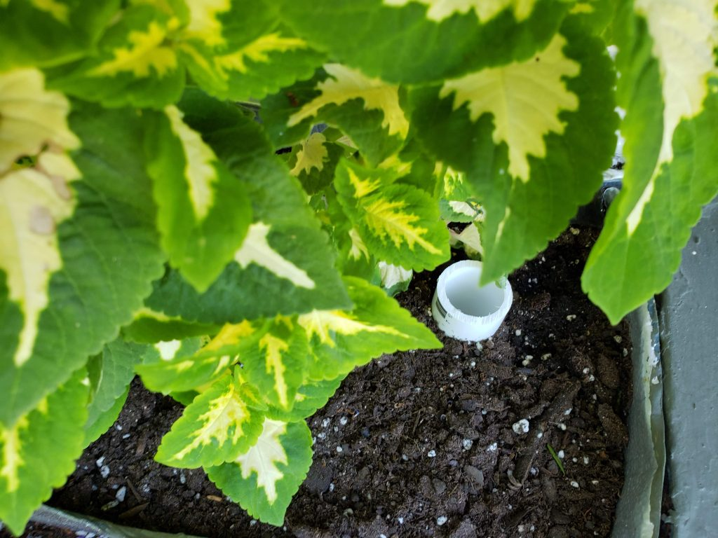 The spout for the self-watering system